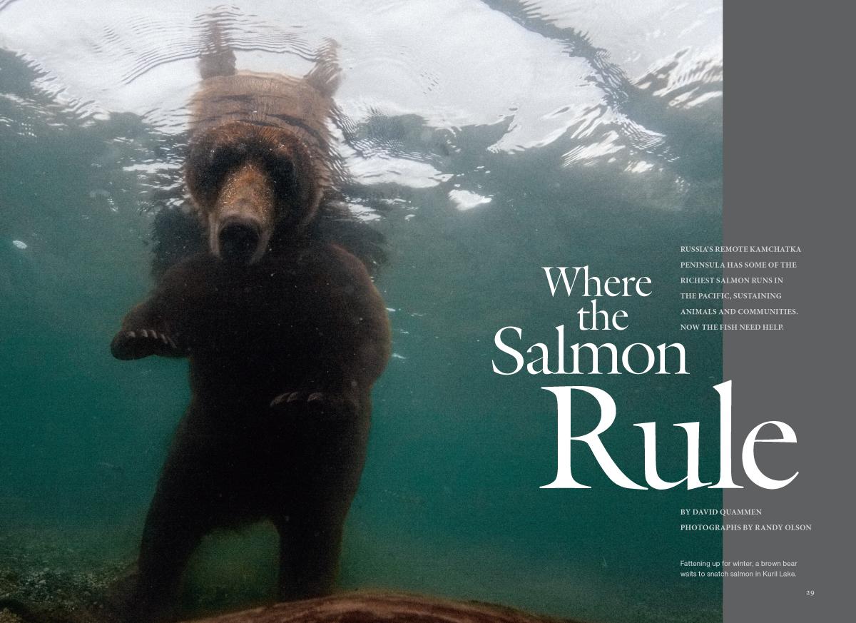 Kamchatka Salmon MM7593-1.jpg