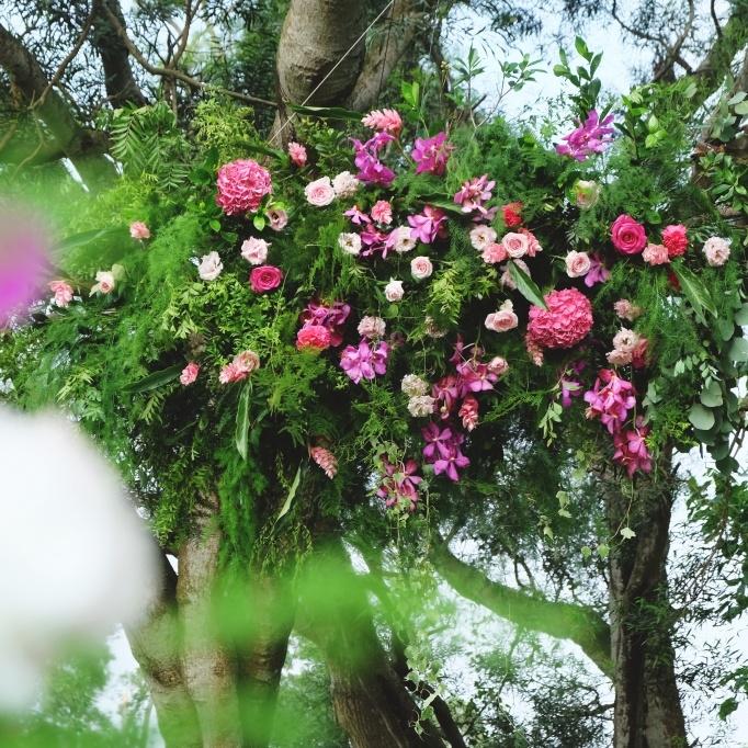 Fuchsia 小桃氣