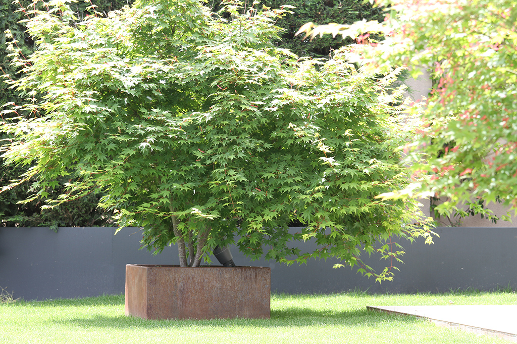 Jardín_20.JPG