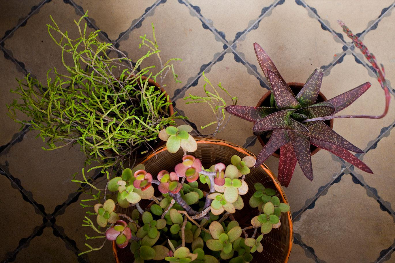 ob-plants.jpg