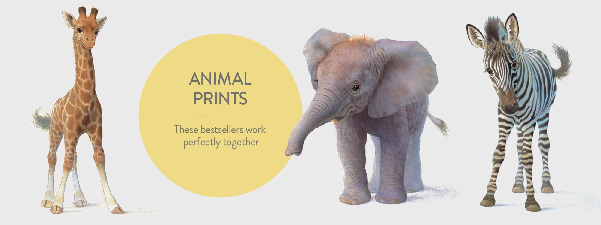 LBZ_BANNER_animalprintsArtboard 2.jpg