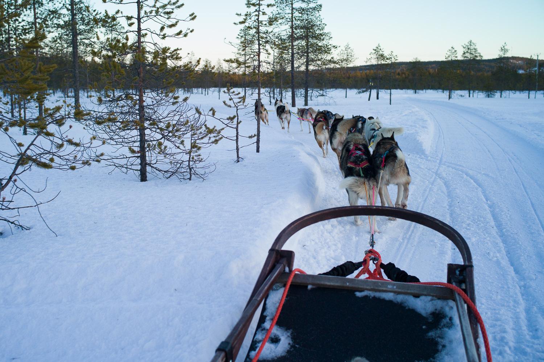 Husky Ride, Santa Claus Village, Rovaniemi