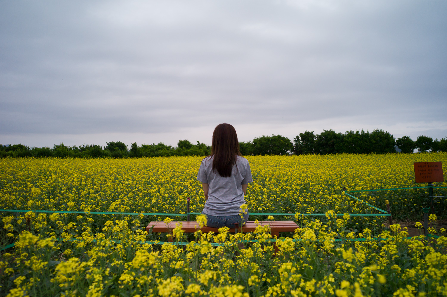 Yellow lady in canola flowers field