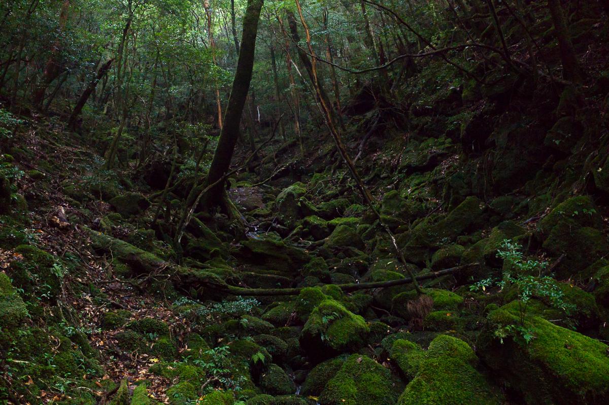 Scenery around Shiratani Unsuikyo, Yakushima