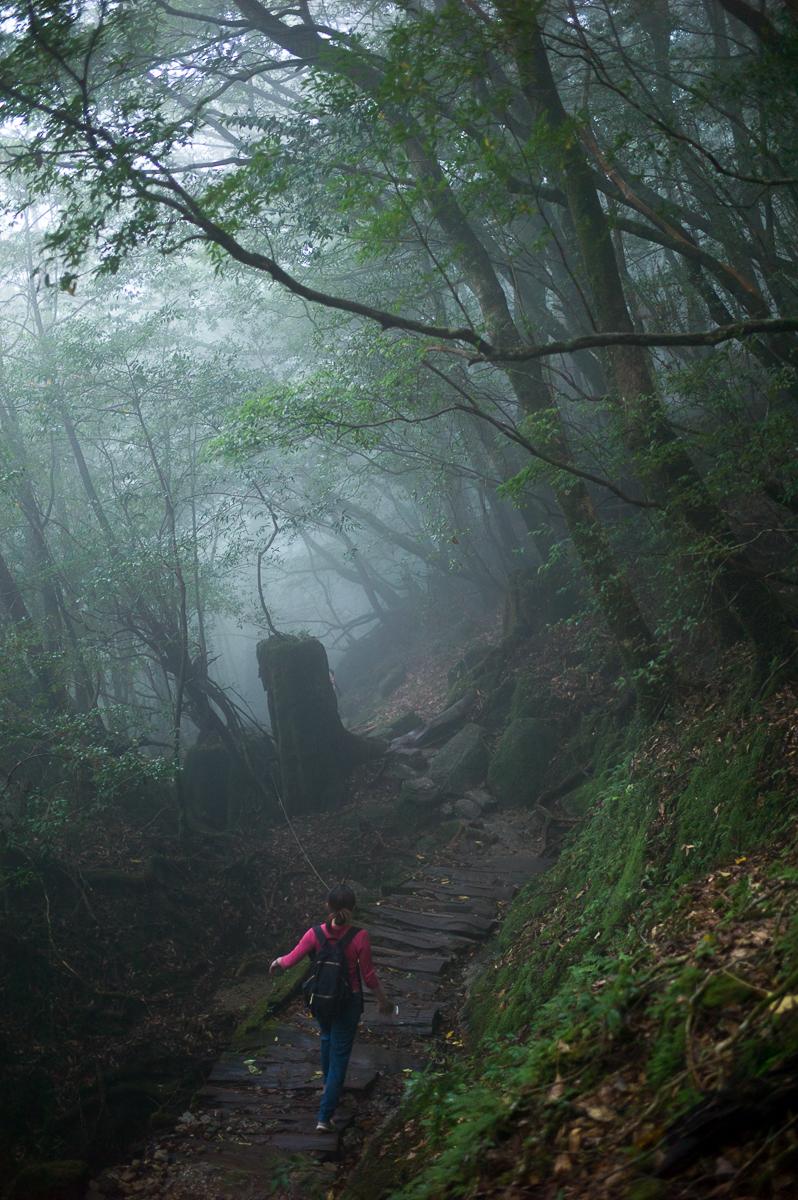 Mysterious Adventure, Yakushima