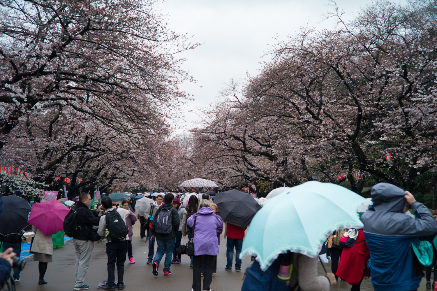 The famous Ueno Park during Cherry Blossom season