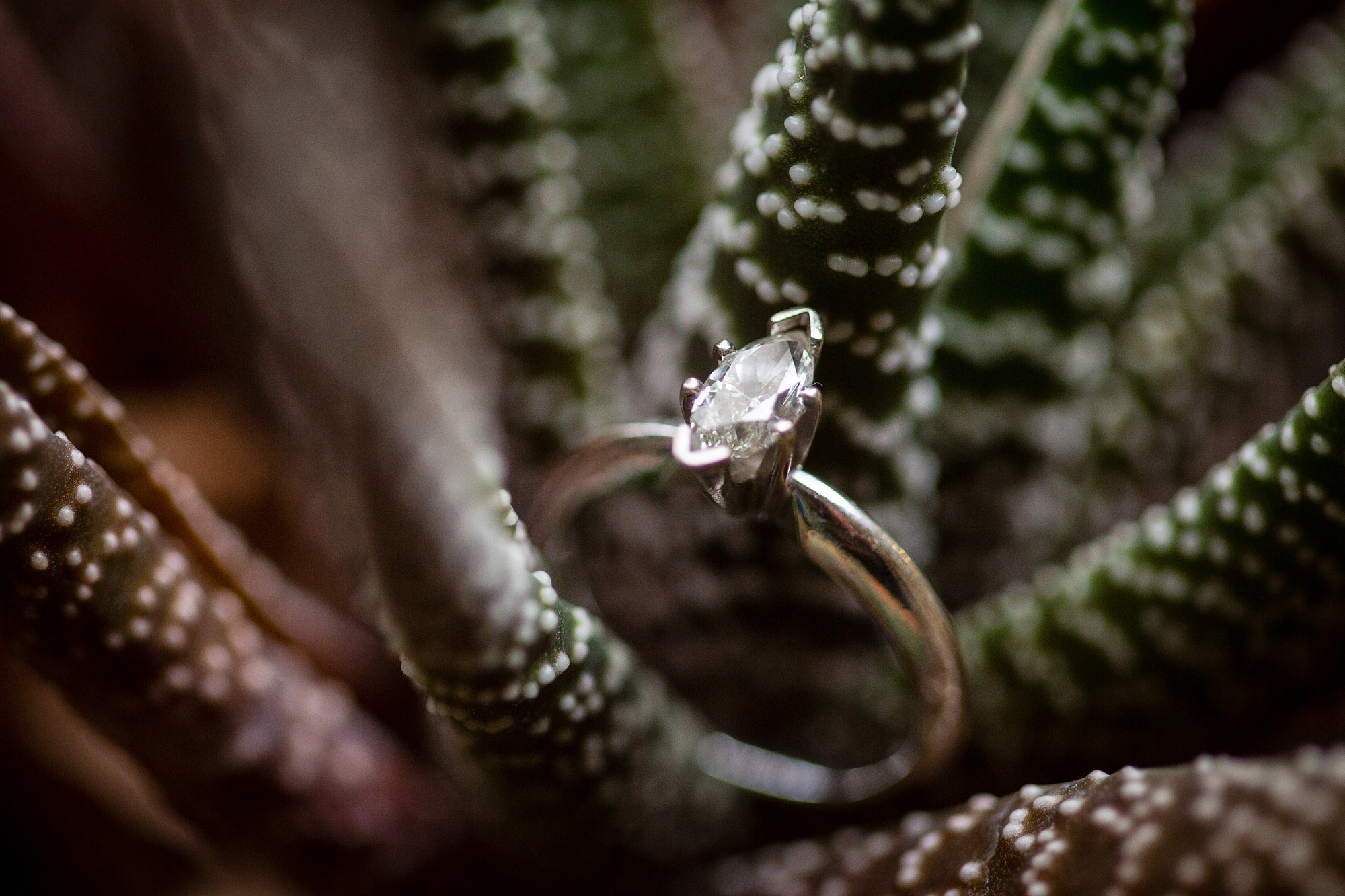 Brandon_Shafer_Photography_Emily_Travis_Kalamazoo_Wedding_Photography_0008.jpg