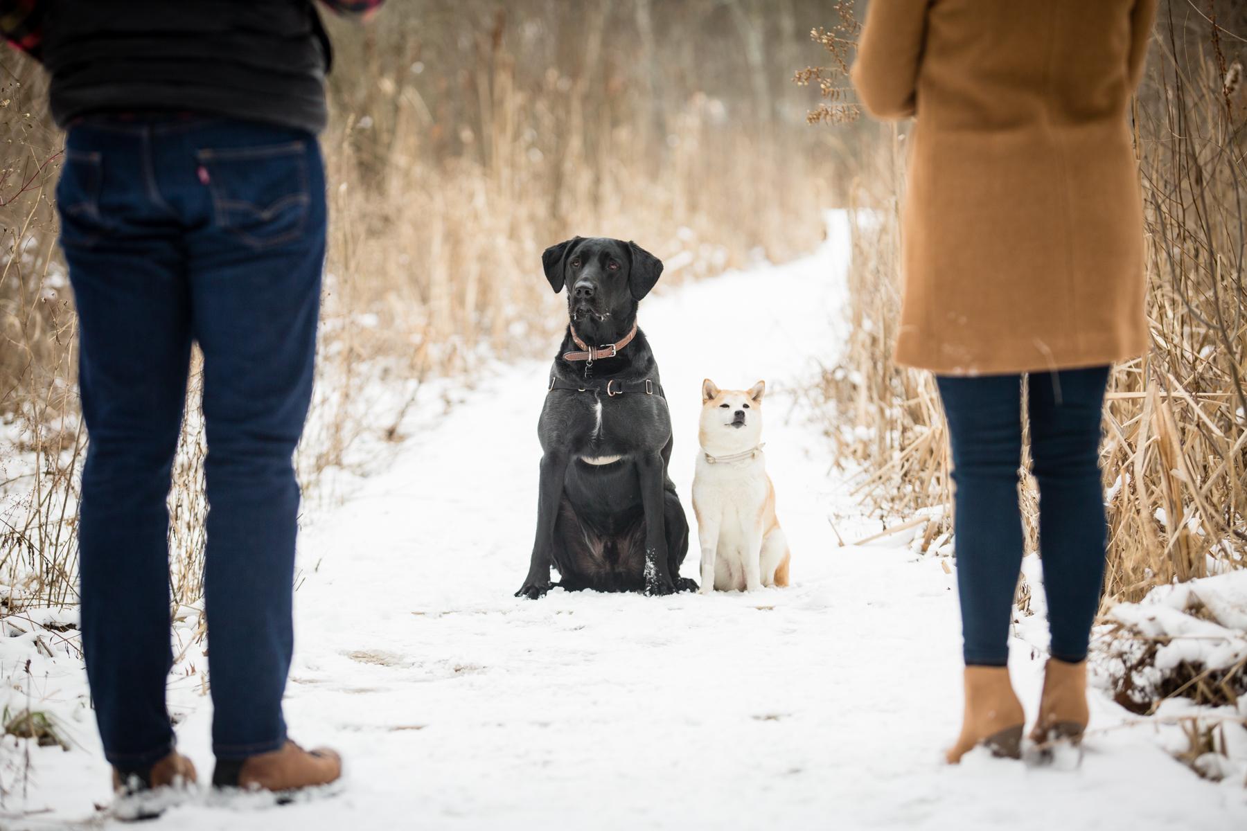 Doug&Kara_winter_Engagment_Photos_Brandon_Shafer_Photography_Blog-14.jpg