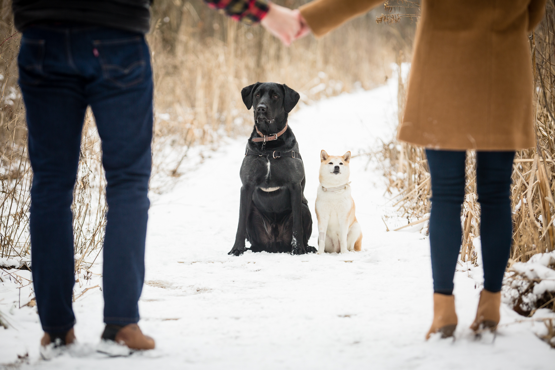 Doug&Kara_winter_Engagment_Photos_Brandon_Shafer_Photography_Blog-15.jpg