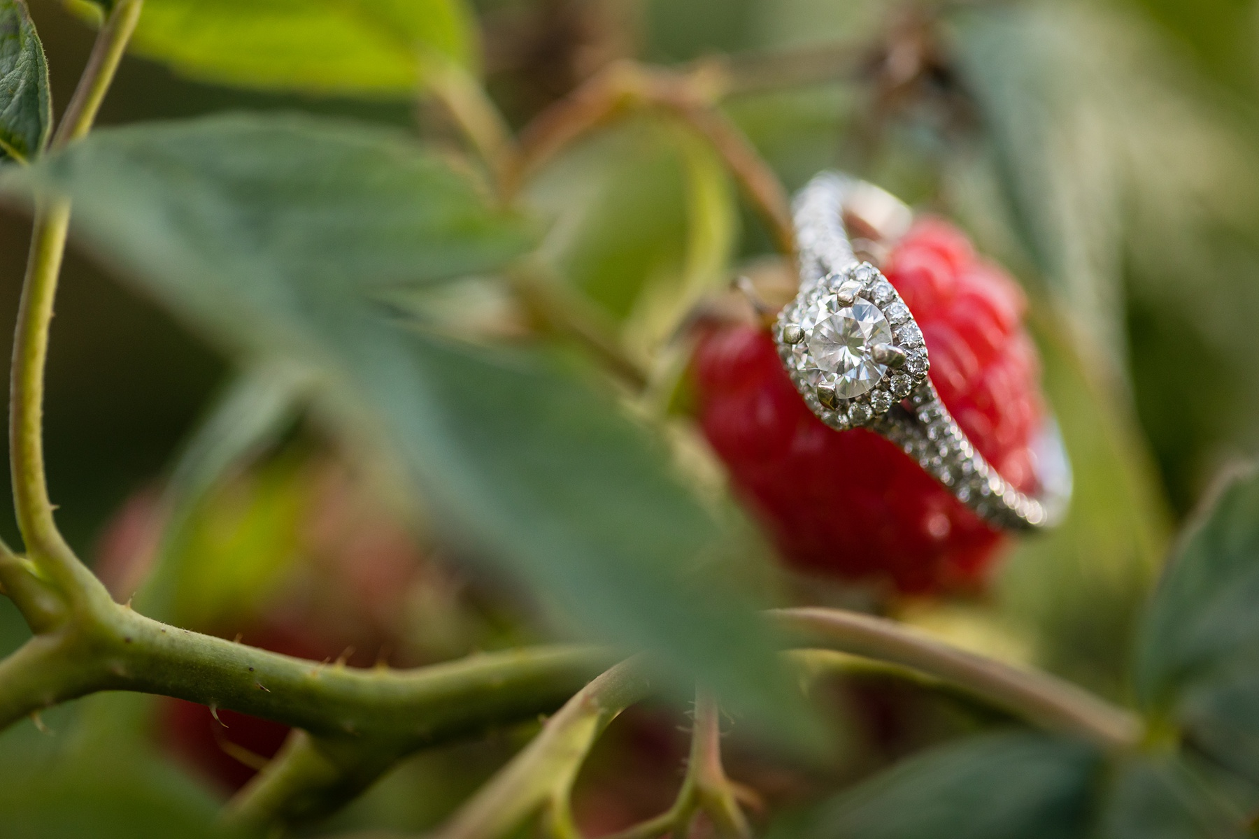 Brandon_Shafer_Photography_Danielle_Matt_Apple_Orchard_Engagement_Photos_0013.jpg
