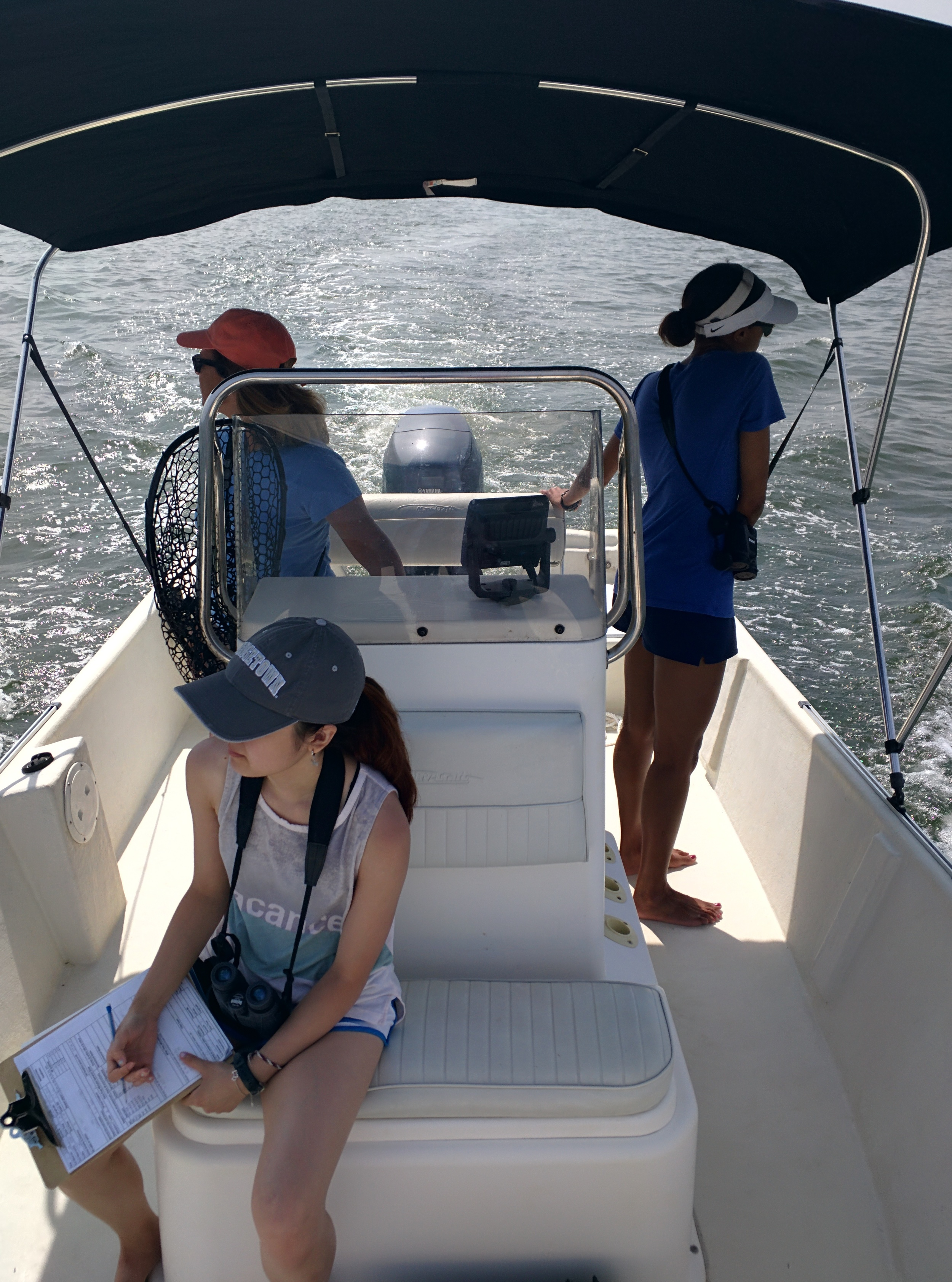 Kate Jin, Dr. Janet Mann, and Desiarae Cambrelen collecting data aboard Ahoya. This was Kate's first day out on the water learning to collect data for her synchrony project!