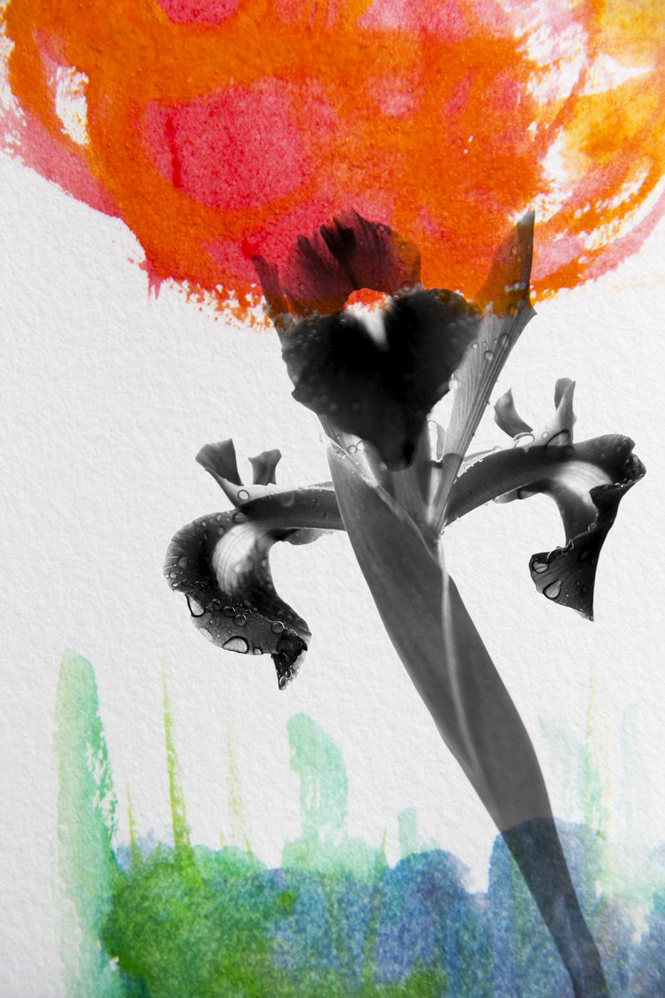 wallflower30.jpg