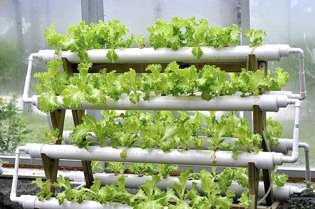 Hydroponic-Gardening_Vertical-Flood-And-Drain-Hydroponic-System.jpg