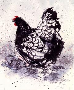 bw chicken lr.jpeg