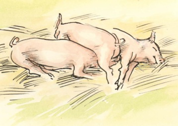 piglets at S of E show 2.jpeg