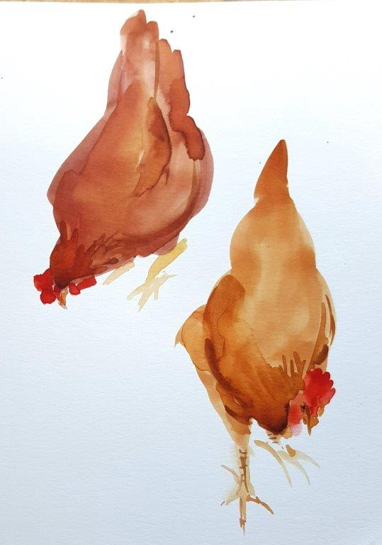 Another pair of chickens