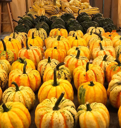 I told you – SO much squash (well, 'tis the season). Left: an assortment of beautiful squash harvested from the farm.