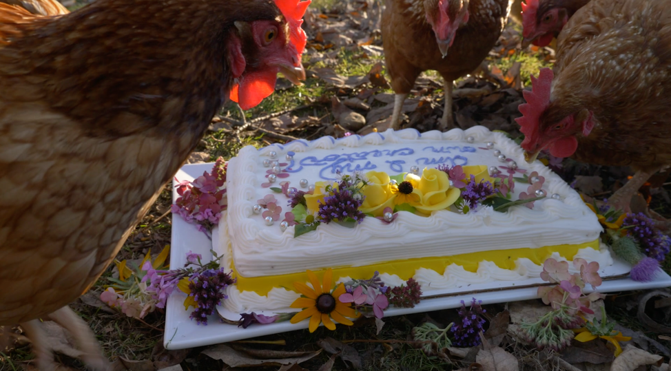 Even the chickens got a cameo appearance in our film!