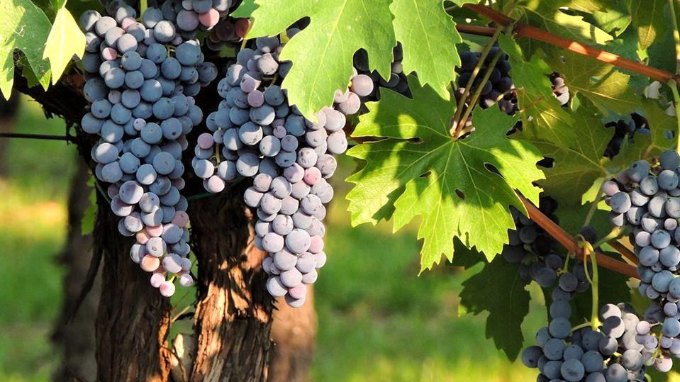 Luxury Yoga Wine Tours with Sensi e Diletti – Northern Italy