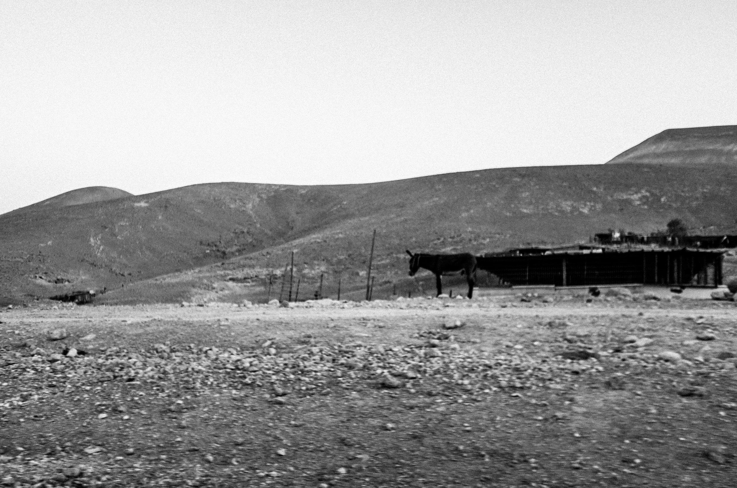 Beduins, Alon, 2017