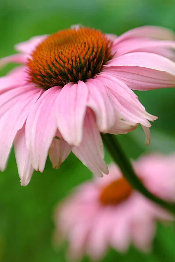 PinkFlowersSm.jpg
