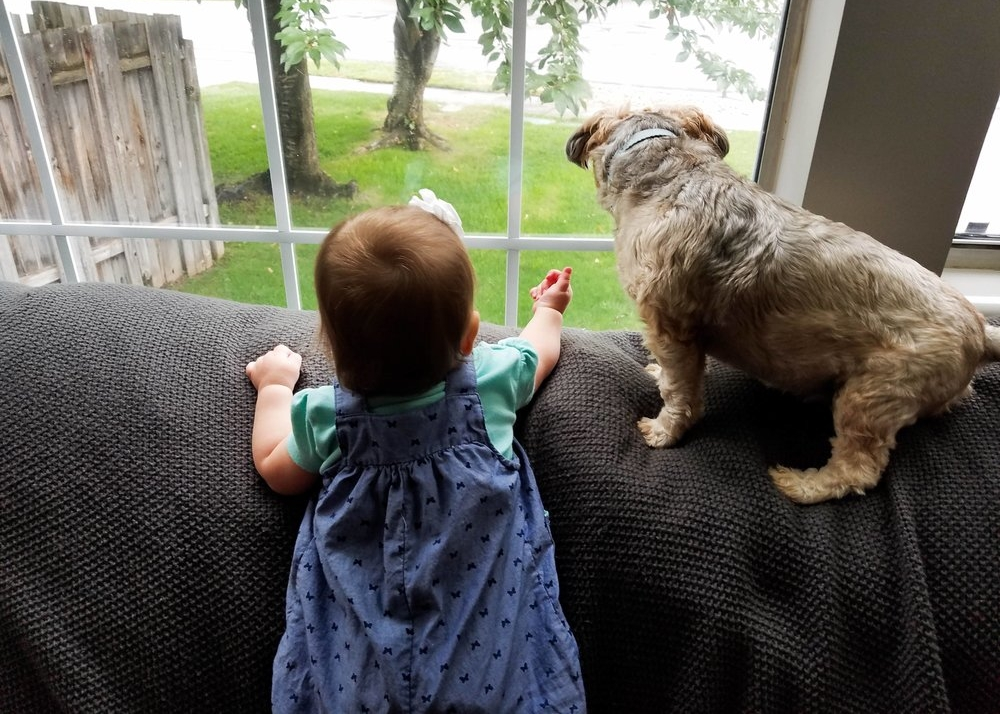 suggestions for getting your dog used to the baby