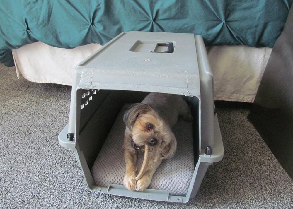 dog kennel train