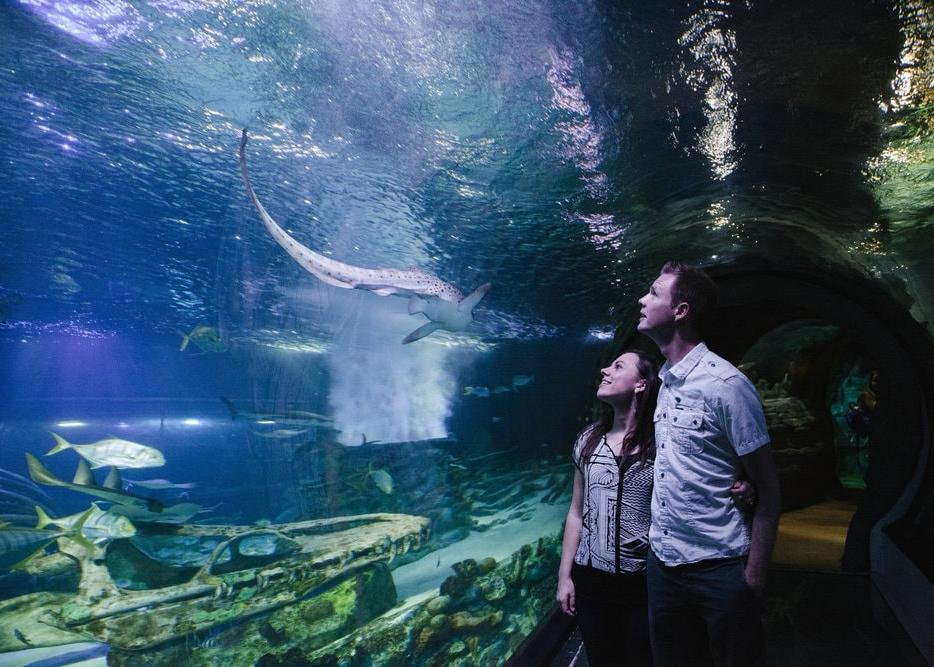 date night at the aquarium