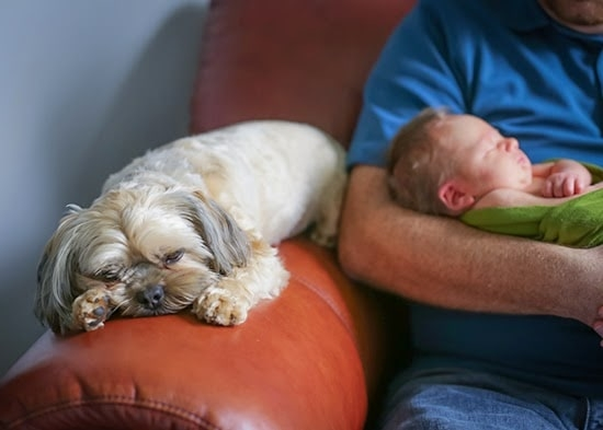 puppy and new baby
