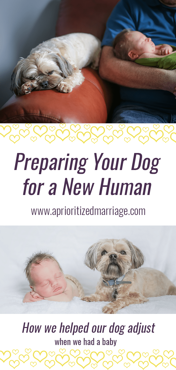 Help your dog adjust to the addition of a new human in your house with these tips.
