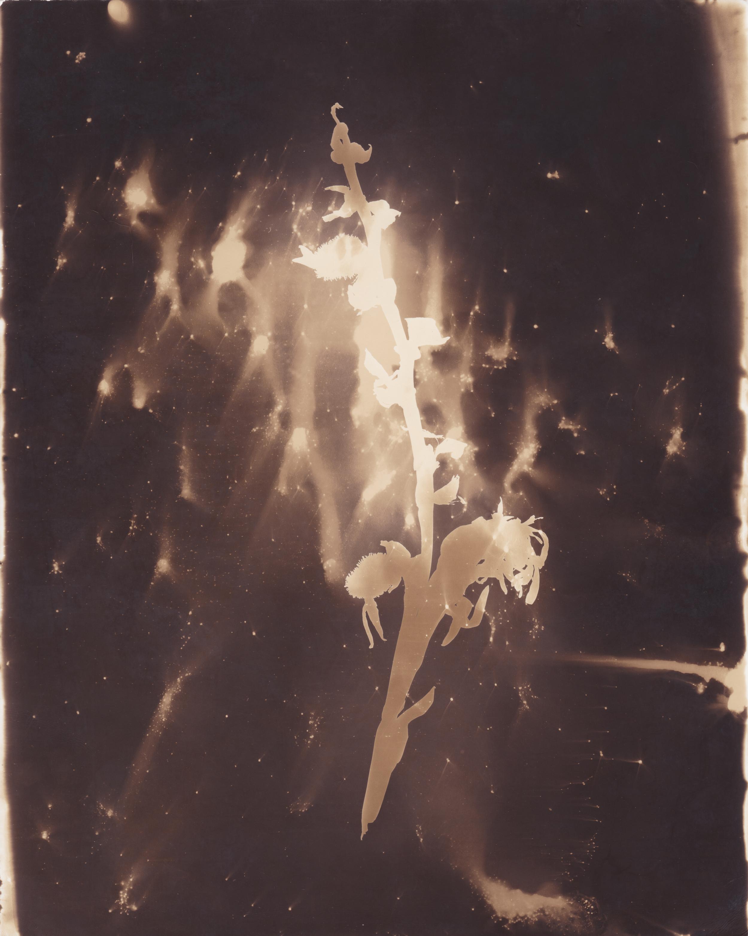 A Vast Nebular Cloud