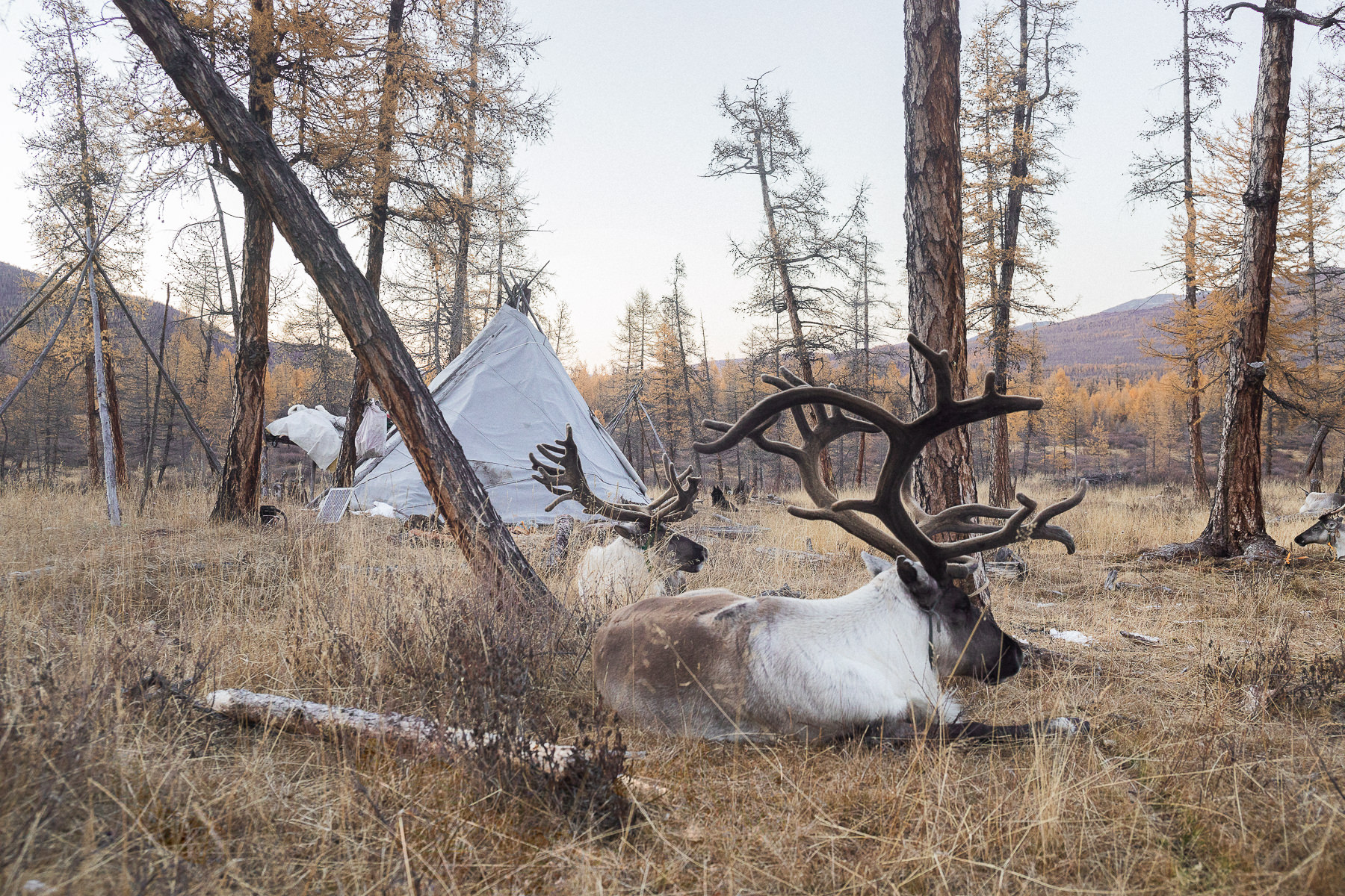 Briceportolano_Mongolia_Zaya_02_WEB.jpg