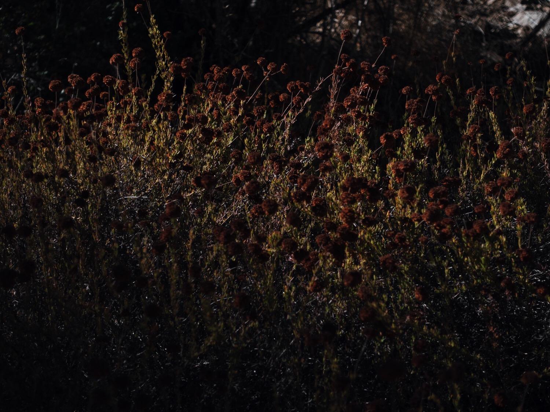 Photo Oct 04, 11 47 03 PM.jpg
