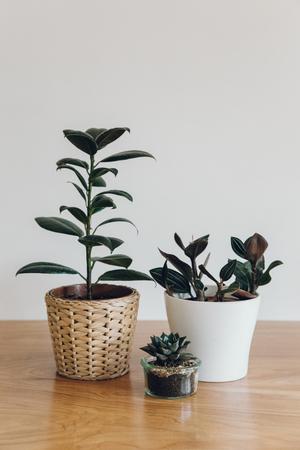 Haarkon+Plants+Garden+Jungle+Nature.jpg