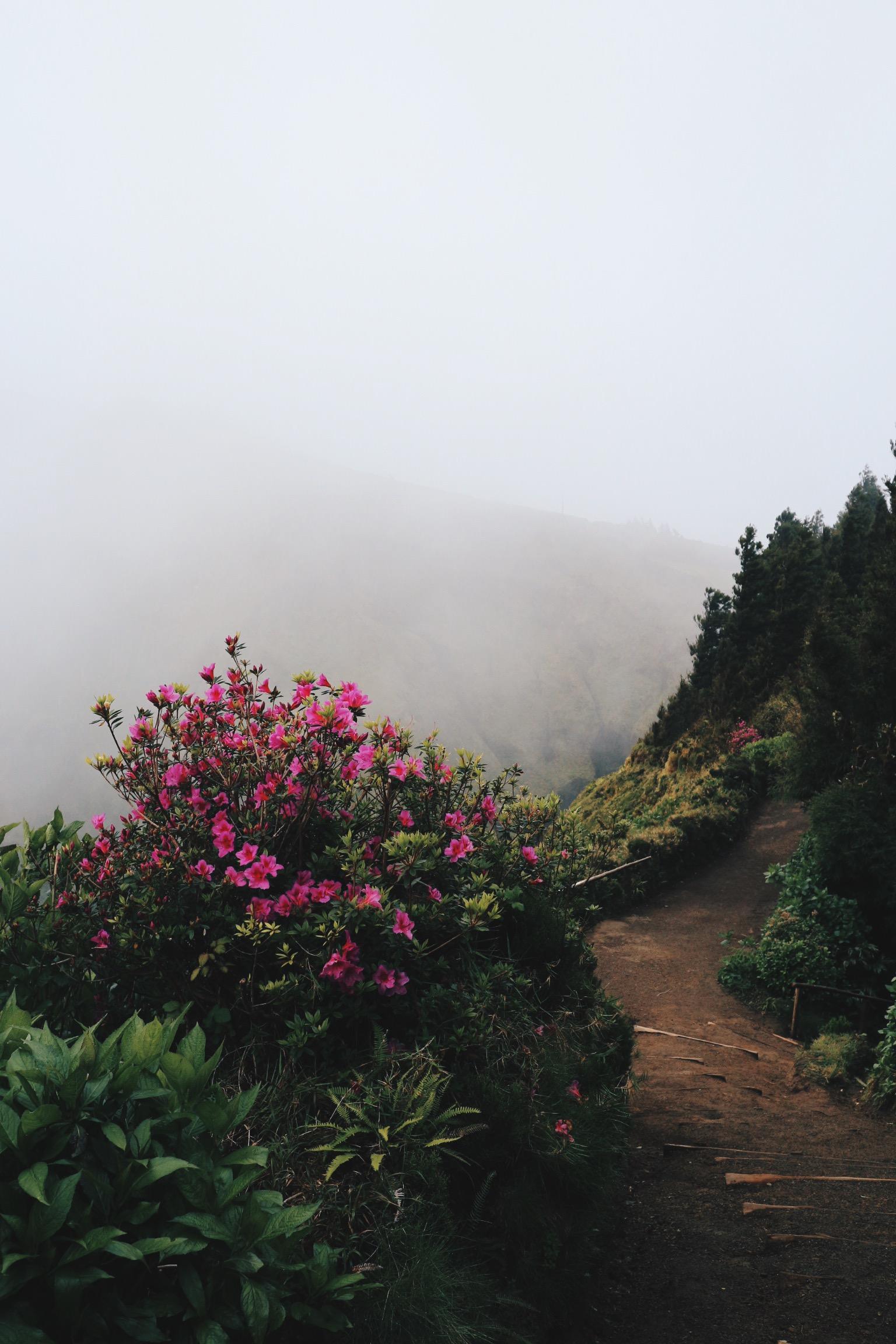 Azores Greenery.JPG