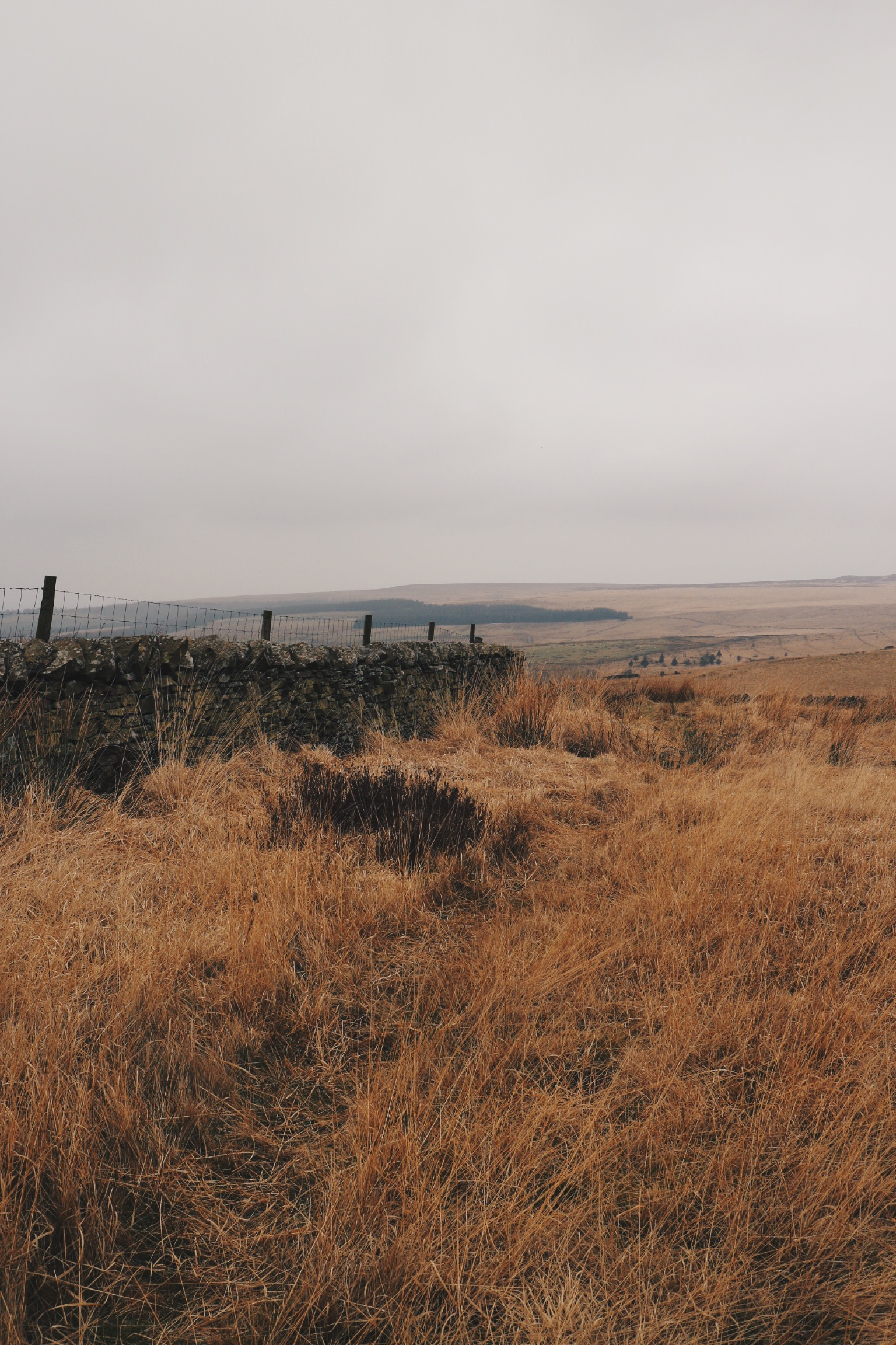 Up on the moors