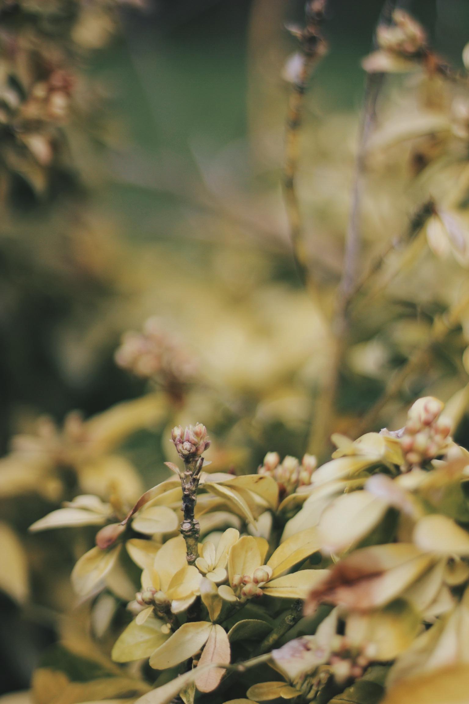 Bokeh with plants