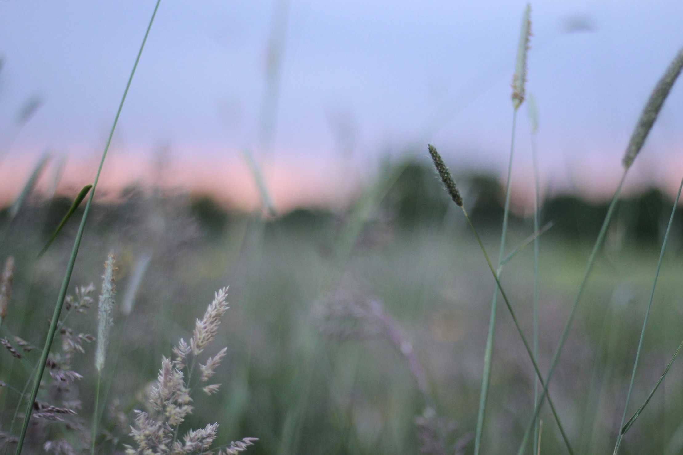 Summer, meadow, grasses