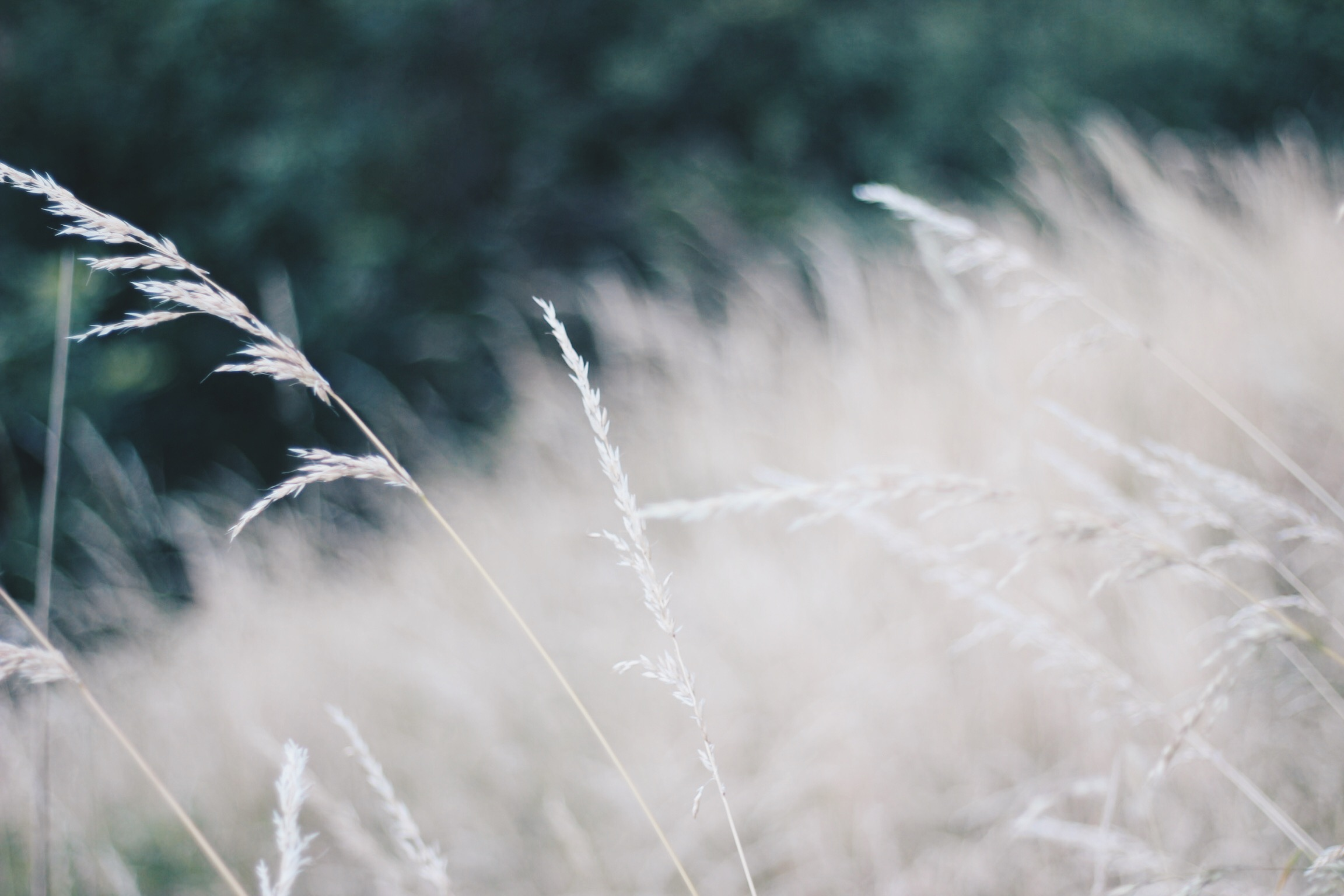 Grass in the Summer