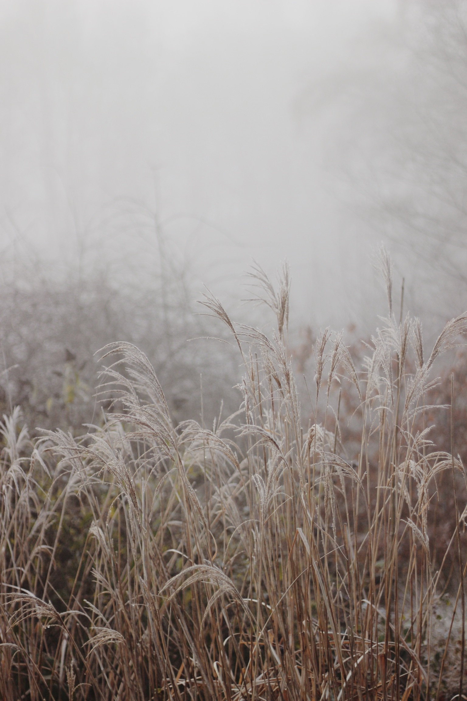 Winter landscape, grasses in field