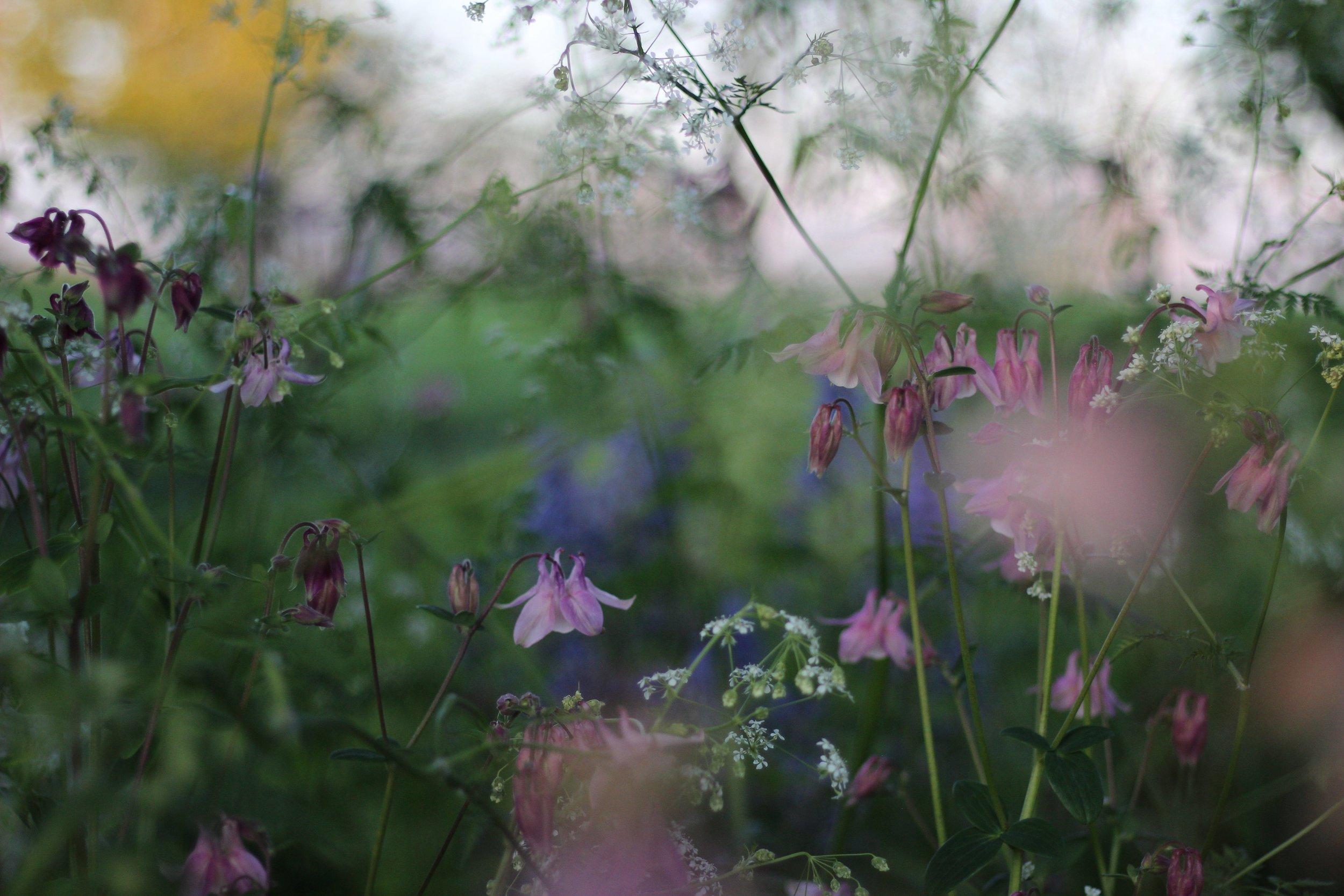 Wild Flowers in Spring | Field + Nest