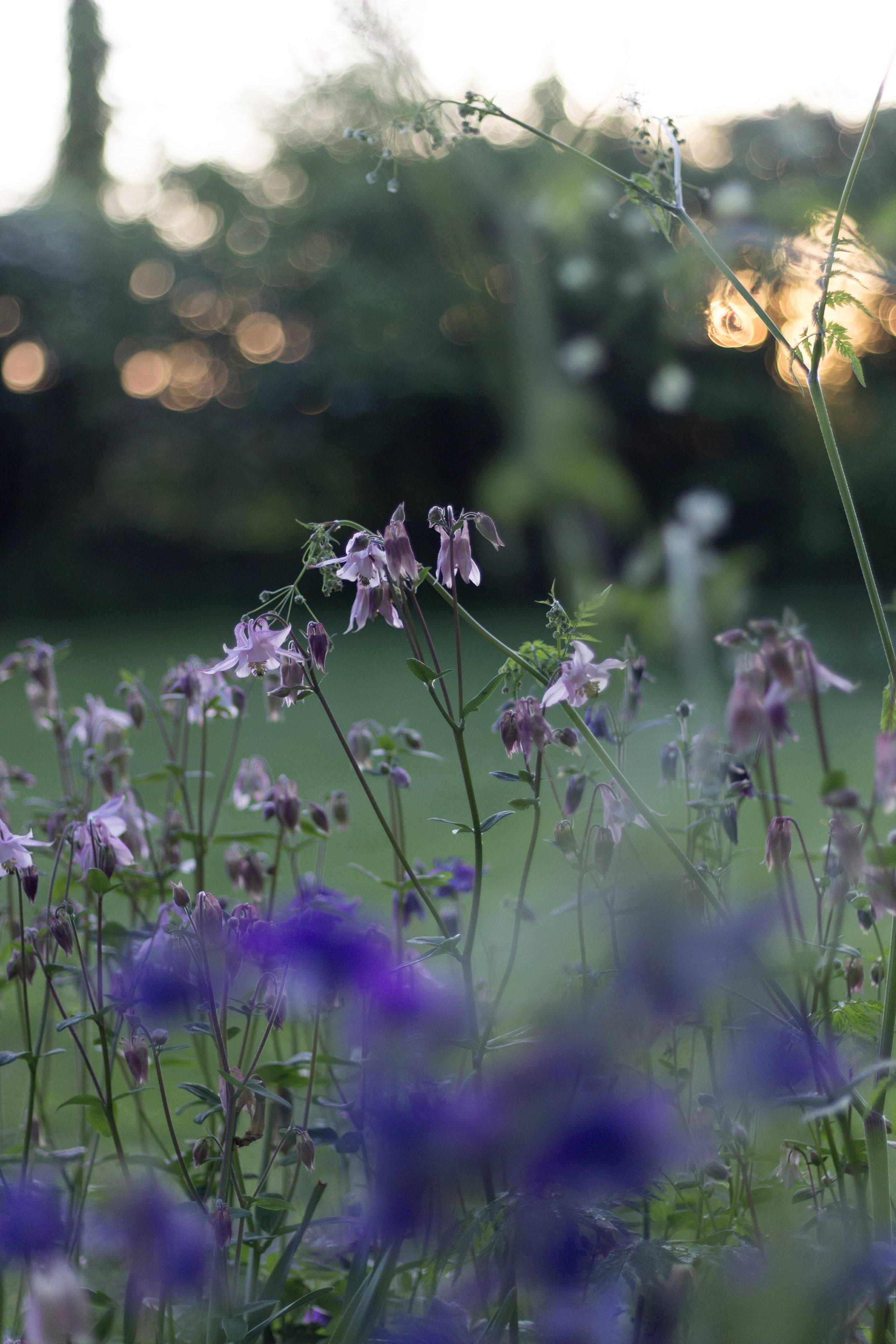 Spring Wildflowers | Field + Nest