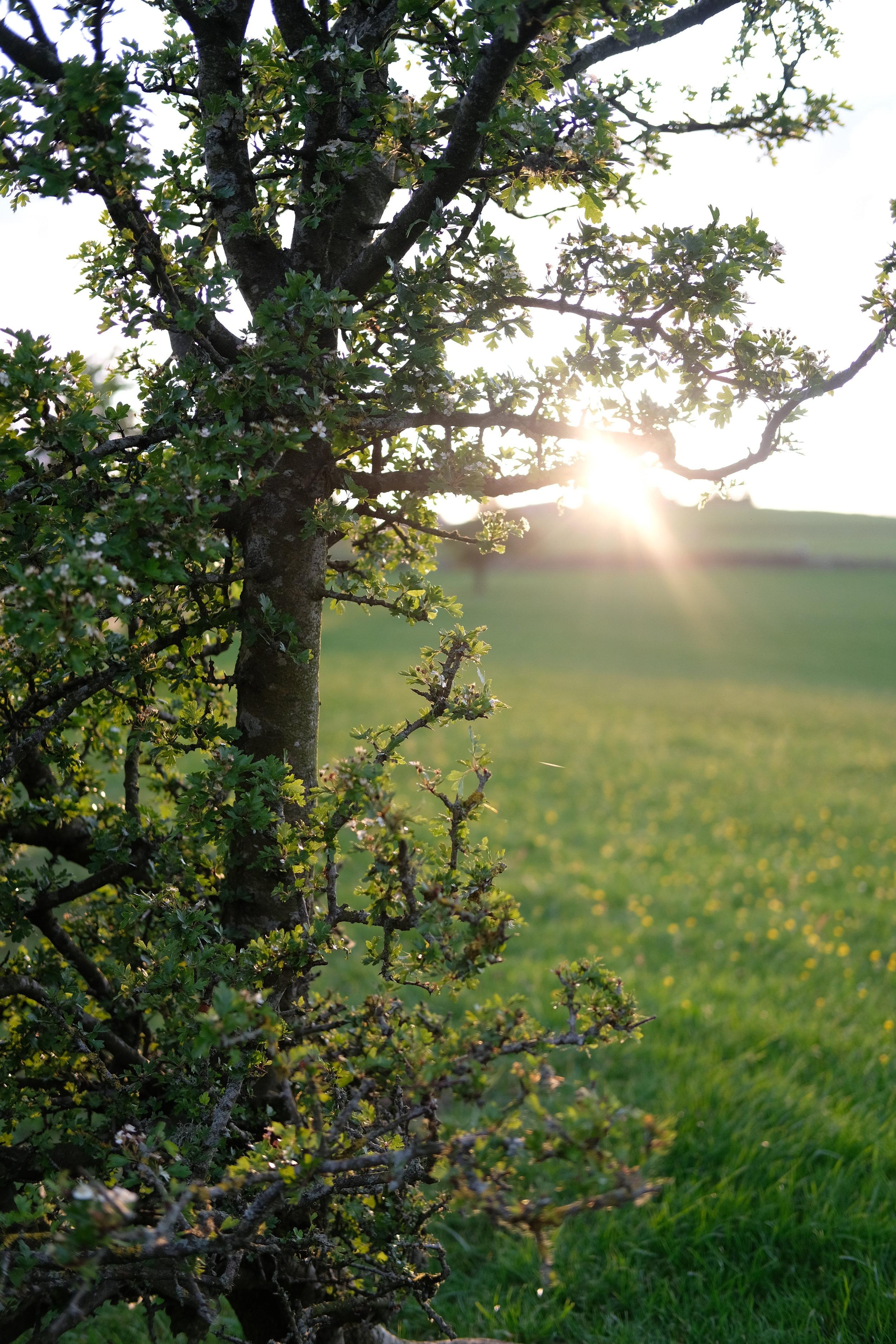 Countryside Views | Field + Nest