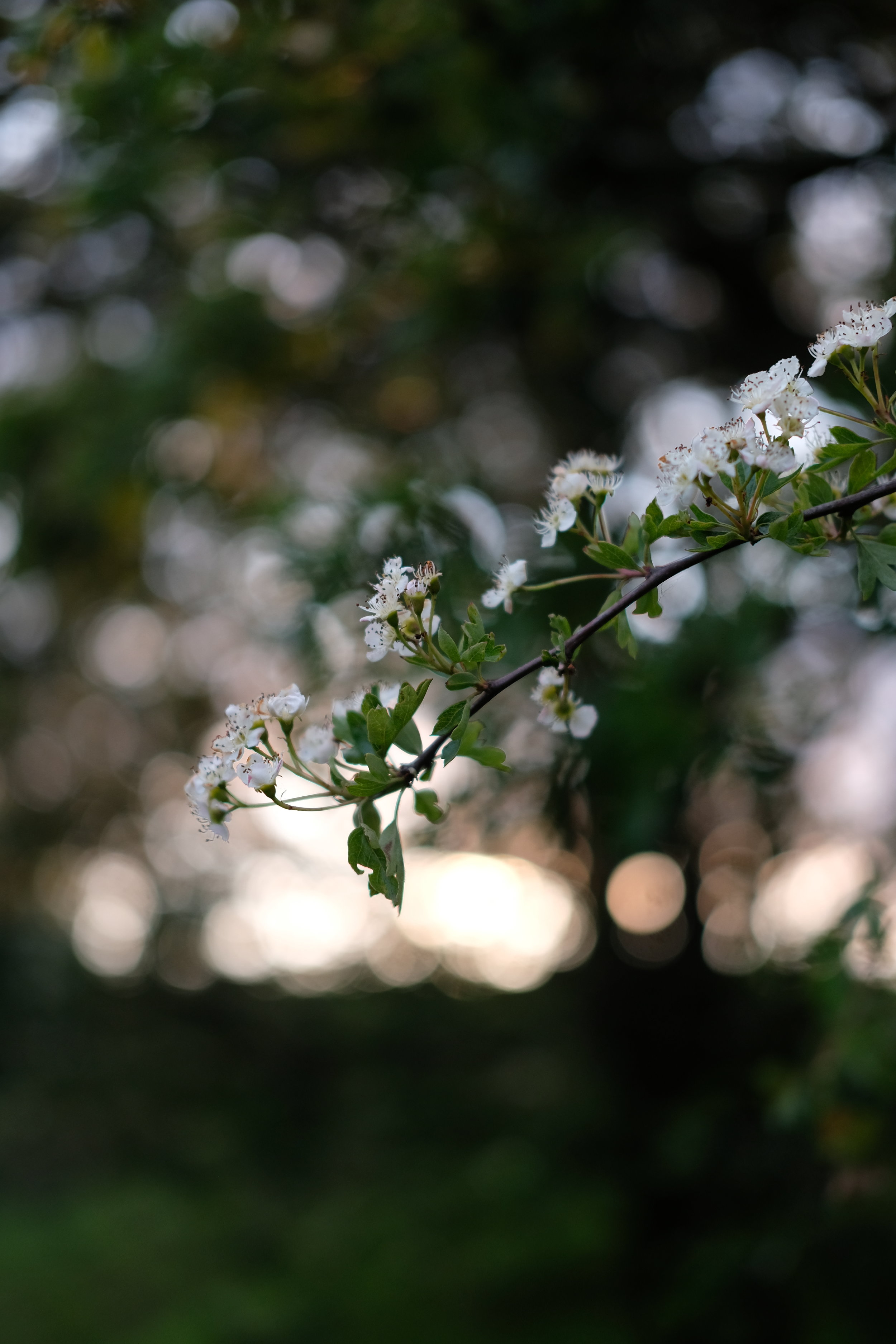Blossom and bokeh | Field + Nest