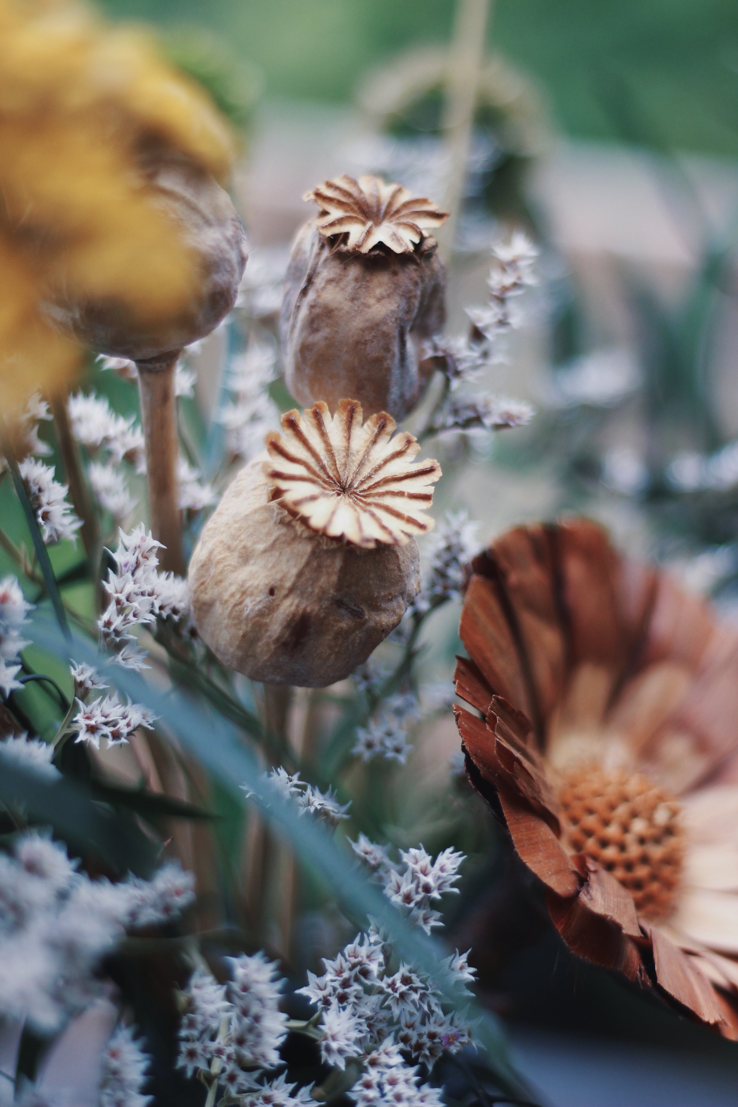 Shida Preserved Flowers | Field + Nest