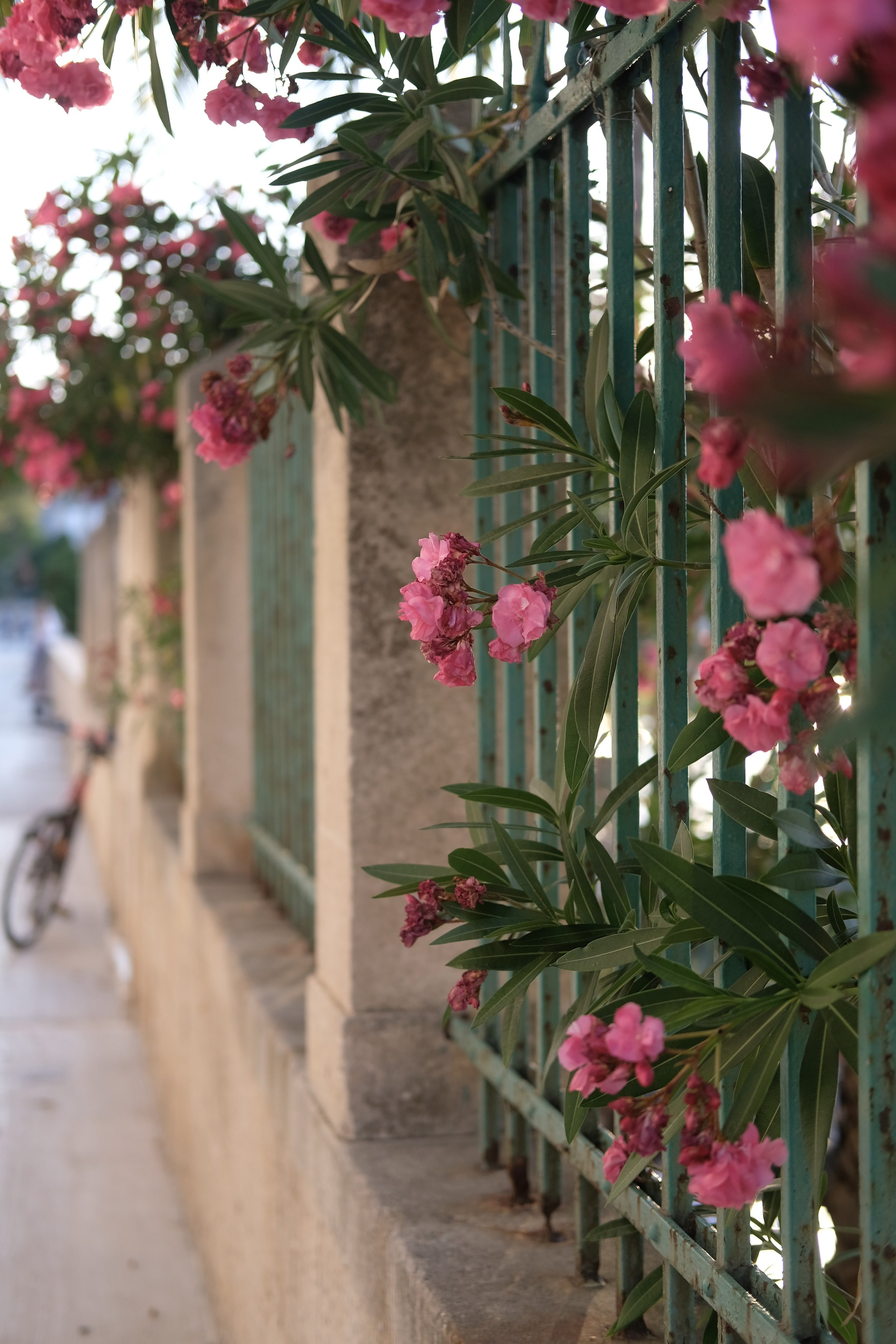 My Slowest Ever Trip: Vis, Croatia | pink flowers in croatia | Field + Nest