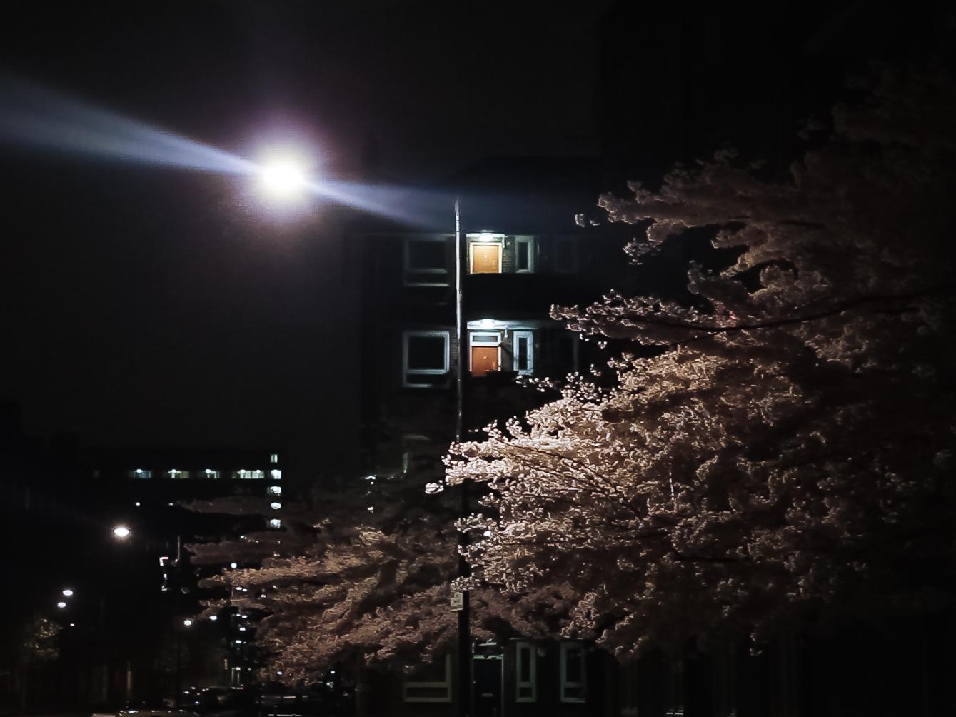 flowers at night.jpg