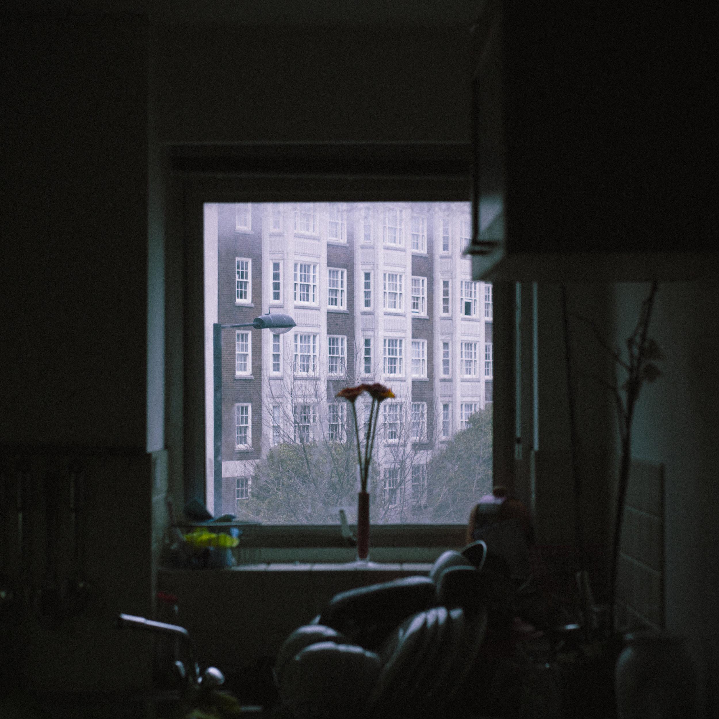 roses in the window_.jpg
