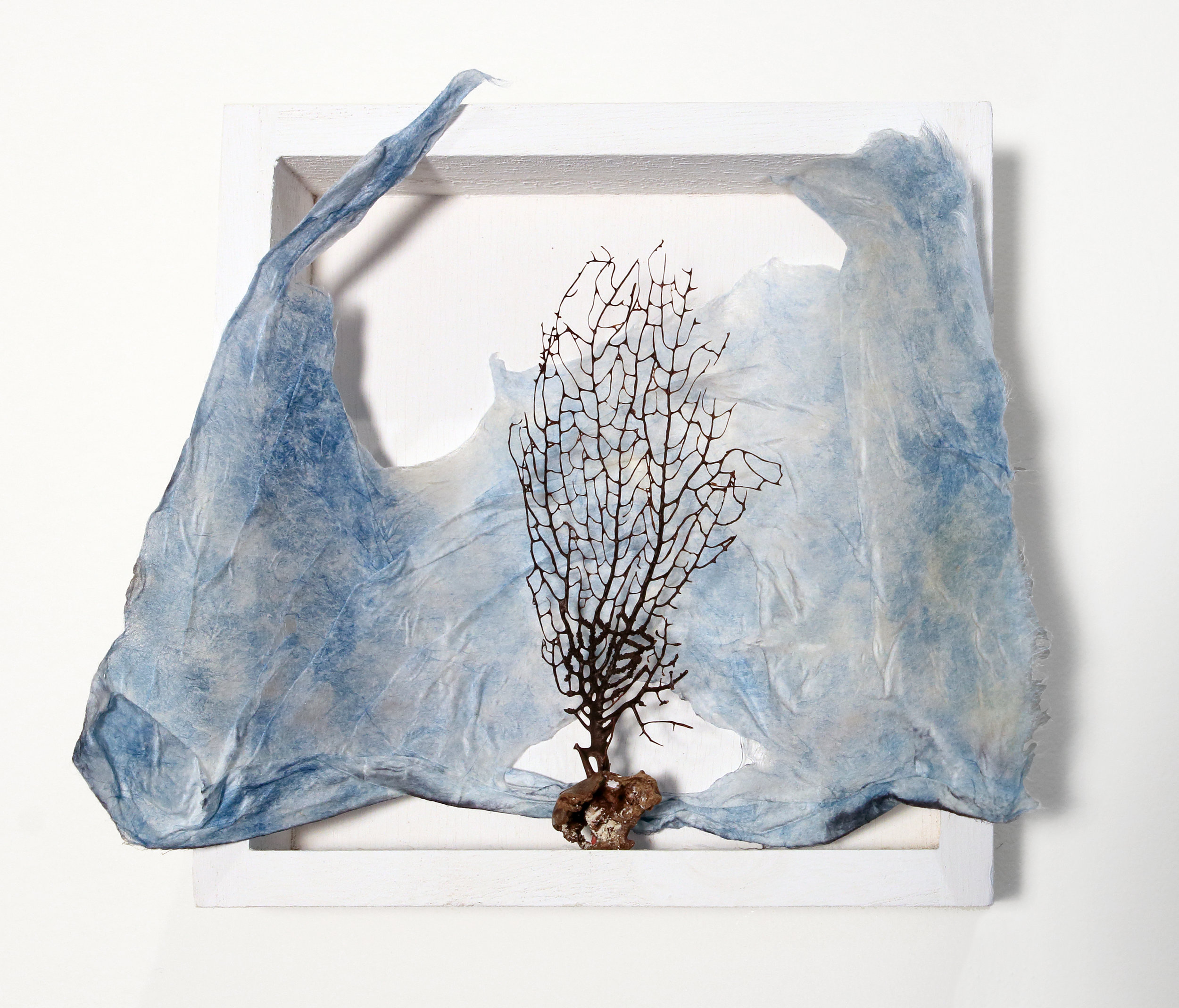 "Cherished Box, found natural object cradled in cyanotype printed handmade Kozo paper, 8""x8"""