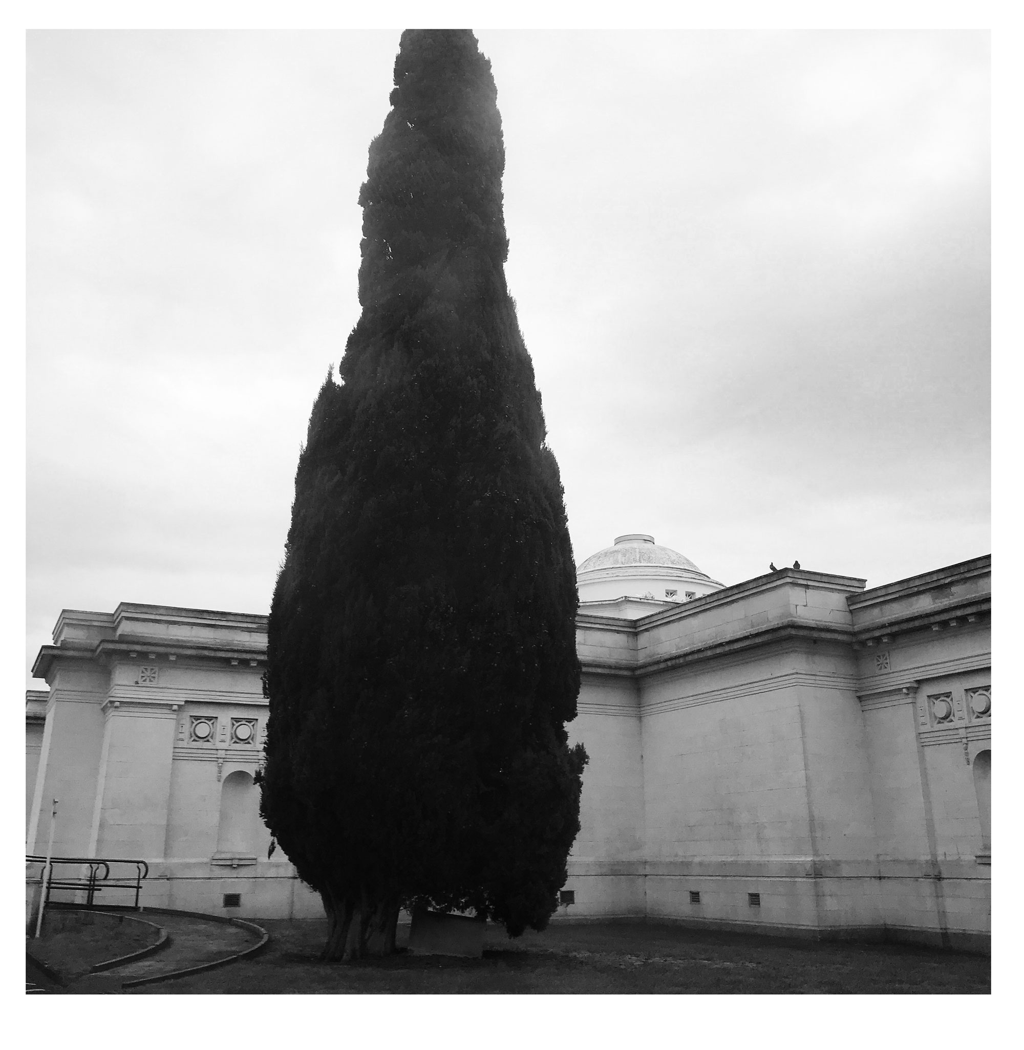 Sarjeant and tree from the car, in the rain, 31 October 2017